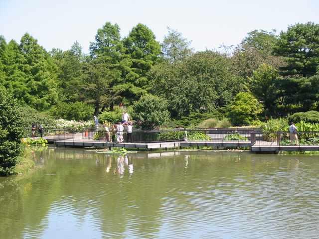 The walkway through the aquatic garden.