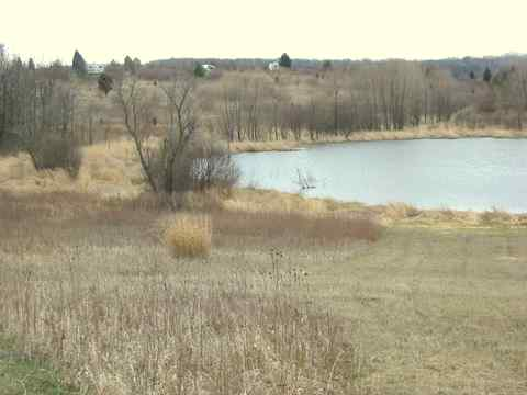 A pond at Bong State Recreation Area. In the background, you can see the park campground on the rise.