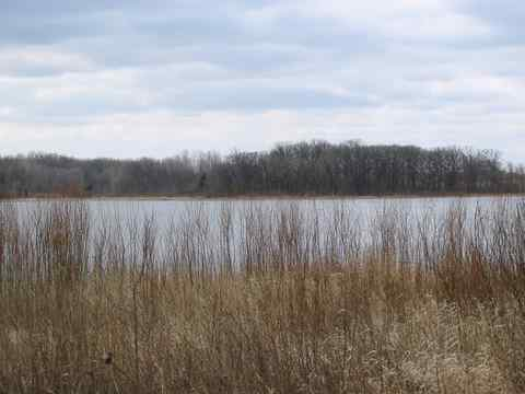 A view of the woodland on the shore of Wolf Lake, opposite the park office.