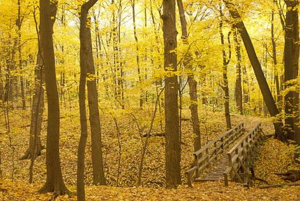 Photo courtesy of the Morton Arboretum