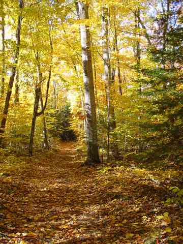 Chicago hosts many great fall hiking options