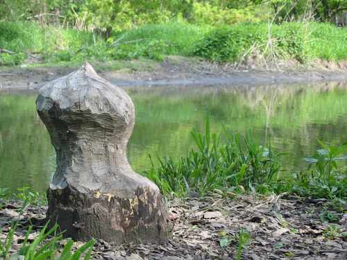 Trailside sculpture