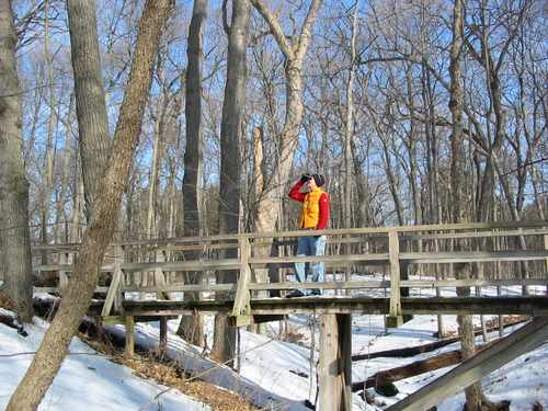 The great variety of trees and shrubs ensures many avian visitors at the Morton Arboretum.