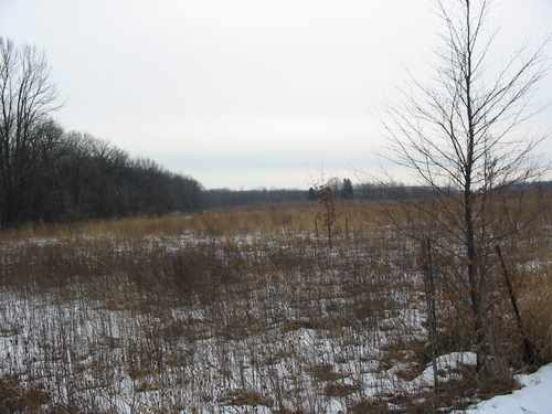 Greene Valley Forest Preserve, prairie, hiking trails