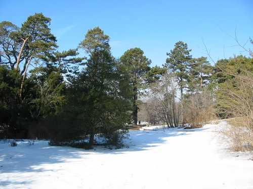 hillside snow Morton-Aboretum