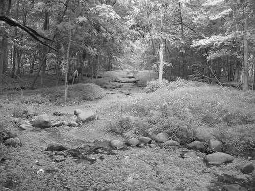 The Silver Springs
