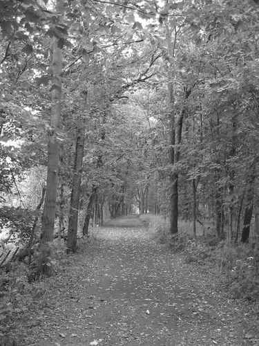 trail Silver Springs State Park
