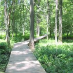 A 0.2-mile boardwalk carries you through a wet bottomland forest and a marshland. It ends at a scenic spot where a metal footbridge takes you across Little Calumet River.