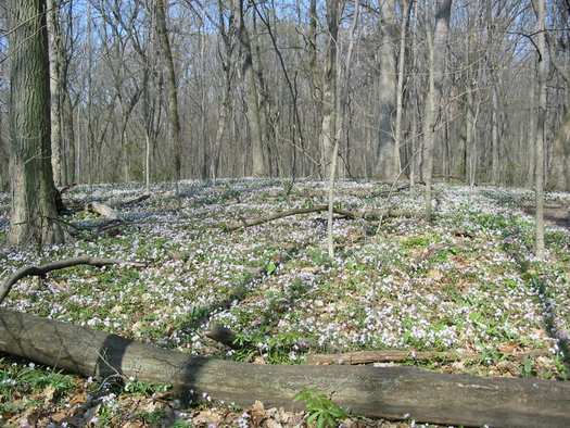 Pilcher Park contains bottomland forest, ravines, streams, a river, and a historic well.