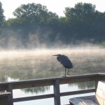 An early morning avian visitor at Oak Ridge Prairie County Park.
