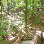 On the first leg of this hike, the trail runs through a series of small wooded ravines.