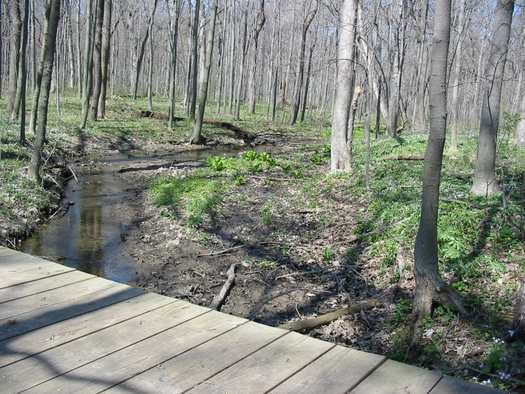 This wooden bridge marks the beginning of the bottomland woods along the trail.