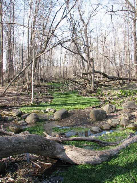 The spring at Silver Springs State Park; photo by John Tarzynski