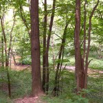 Early in the hike, the trail pulls alongside a 40-foot-deep wooded ravine carved out by Plum Creek.