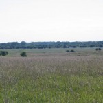 Much of the landscape at Midewin is slowly be transformed from farmland to prairie.