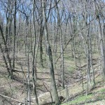 The wooded ravines and high bluffs make for an unusually rugged landscape at McKinley Woods.