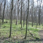Pilcher Park, located on the east edge of Joliet, contains 420 acres of ravines and forested bottomland braided by trails and streams.