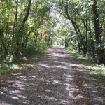 Before reaching Romeoville Road and the Isle a La Cache Museum, the trail passes through a heavily wooded area.